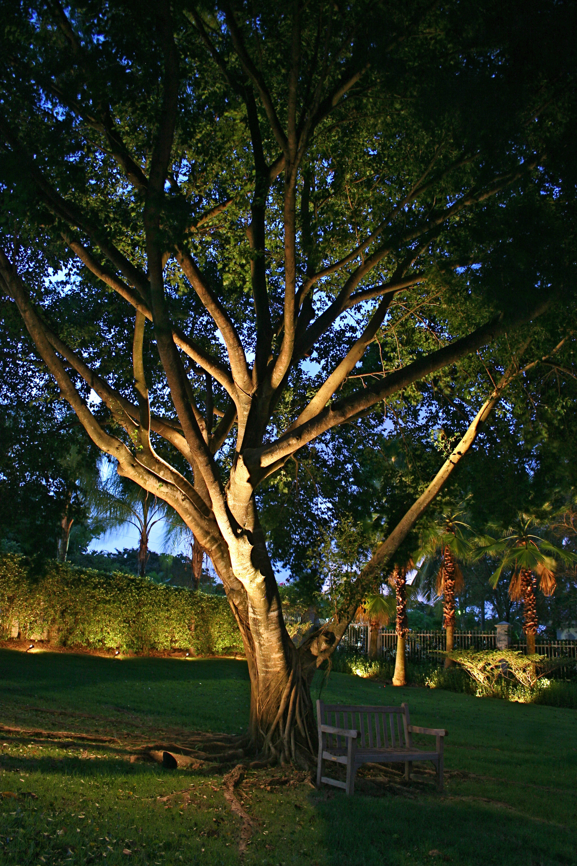 Outdoor Lighting Perspectives of Columbus Makes Trees ...